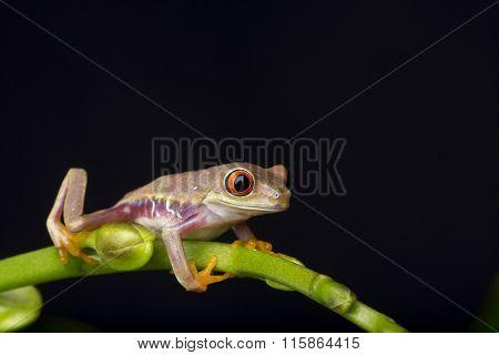 Baby Frog on Stem