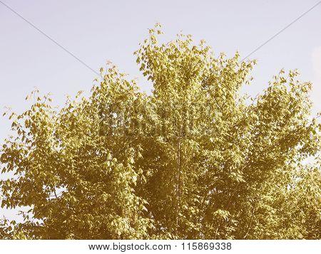 Retro Looking Tree Top
