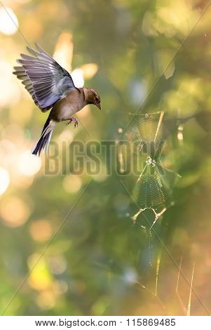 Bird In Flight Against Bright Background