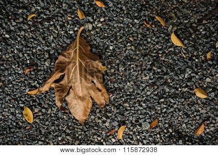 Dry Brown Leaf On Gravel Stone Texture.