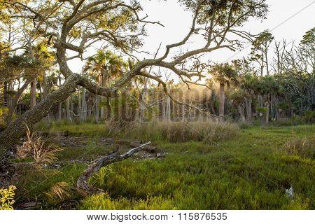 Coastal maritime forest in South Carolina