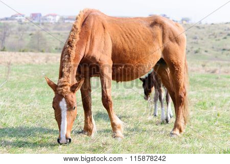 Horses in the meadow spring