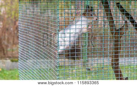 Squirrel in cage