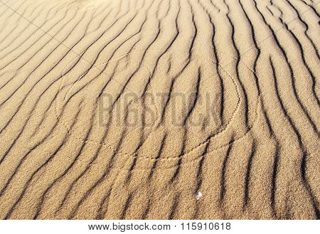 Insect Traces On The Sand