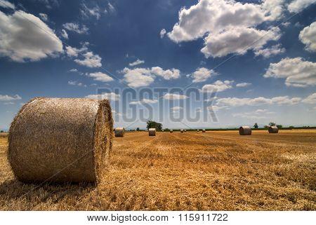 Rural Landscape In Piedmont At Summer