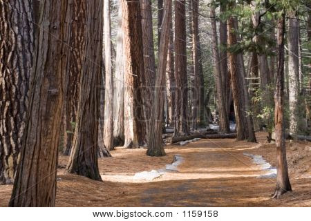 Yosemite Walking Path