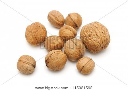 collections walnut isolated on white