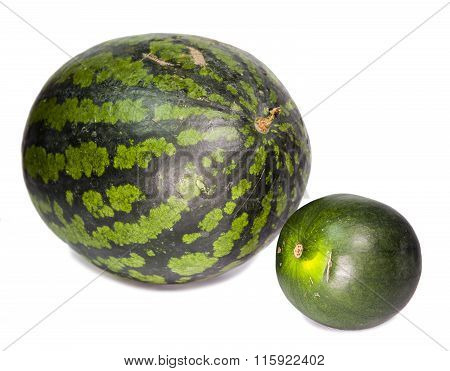 Two water-melons of various grades - big and dwarfish