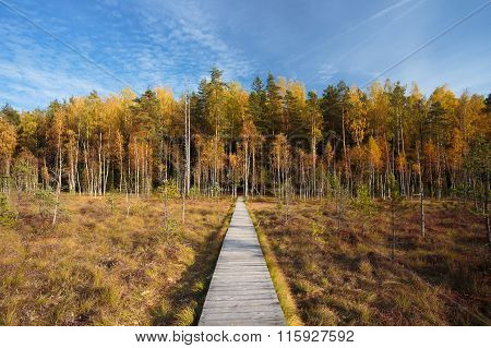 Wooden path way pathway from marsh to forest. Autumn