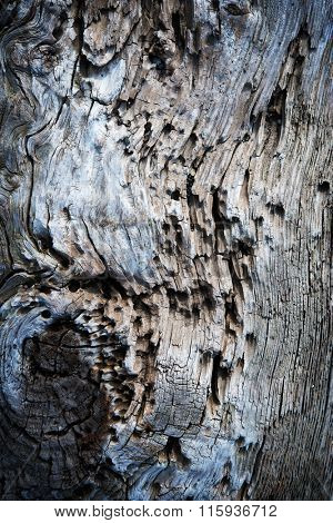 Weathered and corroded old drift wood log.