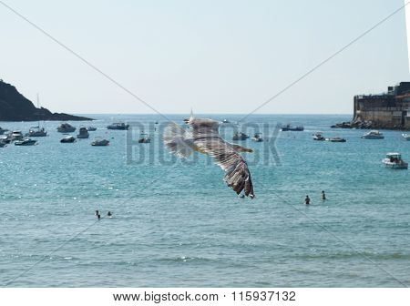 A Gull Flying In Concha Bay. San Sebastian. Spain.