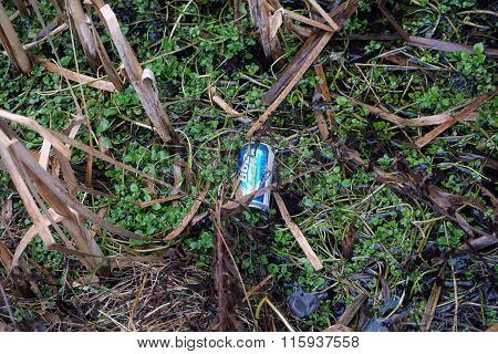 Beer Can in a Swamp