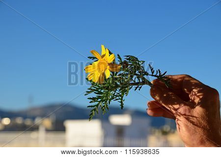 January Spring Flower