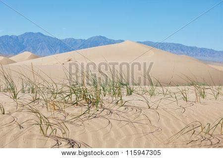 Scenic sand dunes in desert