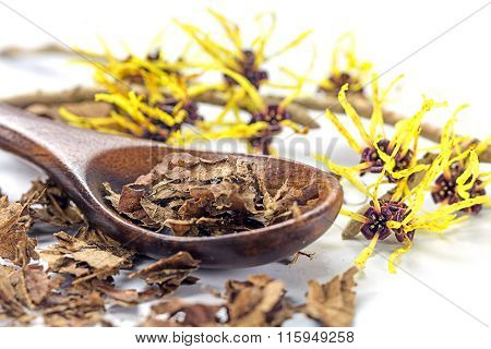 Flowering Witch Hazel (hamamelis) And Wooden Spoon With Dried Leaves For Homemade Cosmetics