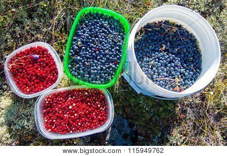 Alaskan Wild Berries