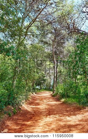 Lloret de Mar forest track to Fenals beach at Costa Brava in Catalonia of Spain