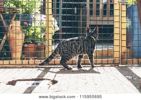 Young Tabby Cat Behind Fence In Garden.