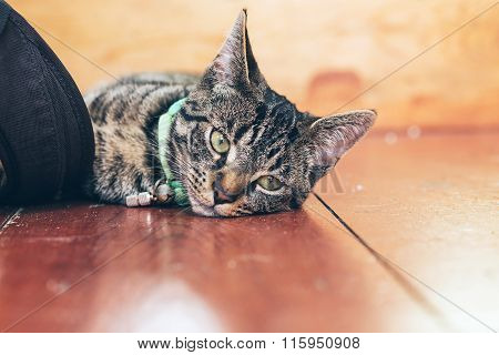 Tired Young Tabby Cat Lying On Wooden Floor In House.