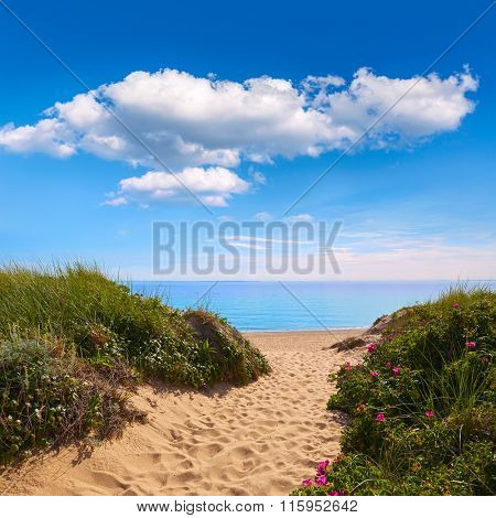 Cape Cod Herring Cove Beach in Massachusetts USA