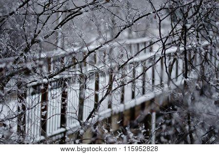 Snow Covered Footbridge Hidden Behind The Frozen Branches