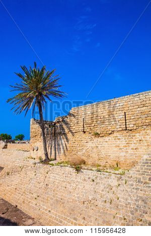 Lone palm tree growing on the rocks. Deep protective moat around the ancient Caesarea, Israel