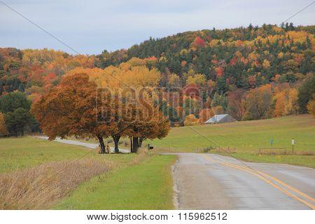 Road through farmland in fall