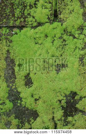 Close Up Green Moss