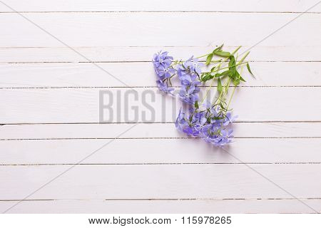 Background With Tender Blue Flowers On White Painted Wooden Planks.