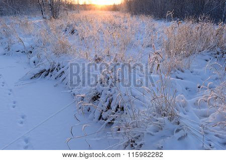 Forest River Wilderness Coastline Grass Under The Snow At Sunrise