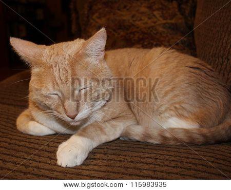 Orange and white tabby cat asleep