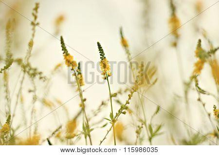 dreamy wildflowers