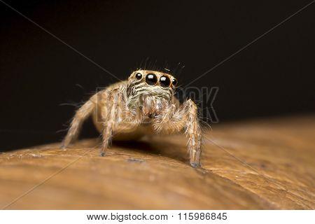 Spider. Photo Was Taken At A Wildlife Sanctuary In Thailand.