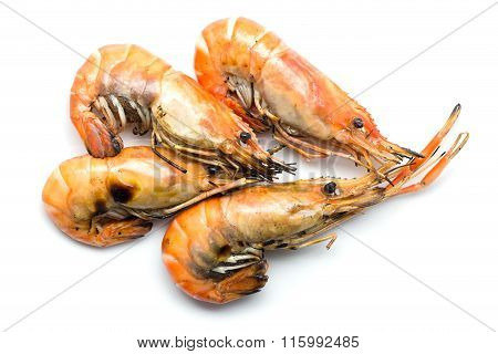 Grilled Prawn On White Background