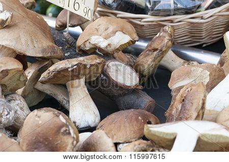 Porcini Mushrooms To The Market