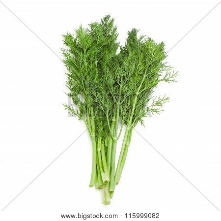 Bundle Of Dill On A Light Background