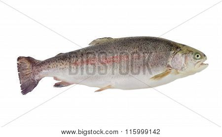 Cleaned Rainbow Trout On A Light Background