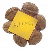 stock photo of allergy  - Nut Allergy Warning with Fresh Walnuts Isolated on White with a Clipping Path - JPG