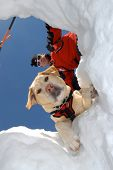 pic of avalanche  - A ski patrol and his rescue dog peering down into Avalanche hole - JPG