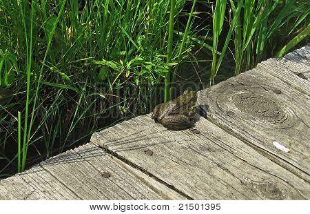 Board Frog