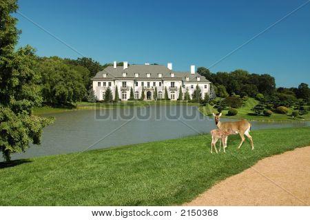 Lilly Mansion