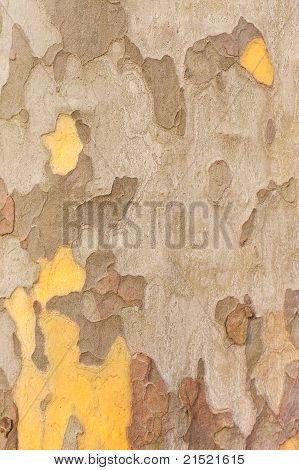 Planetree Bark Background