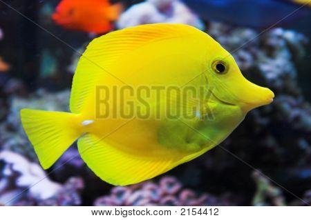 Seawater_Aquarium_Butterflyfish