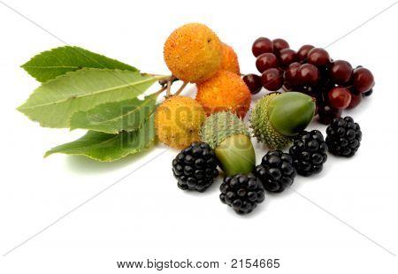 Tavern Wild Fruits