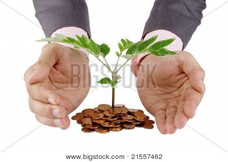 Businessman Protecting Plant