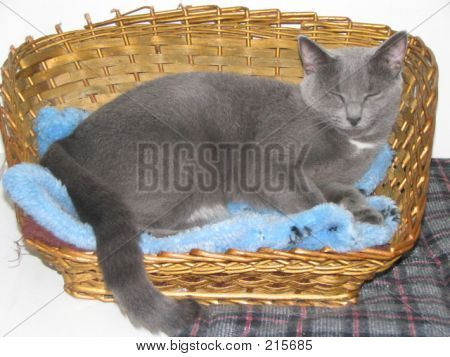 Sleeping Grey Cat