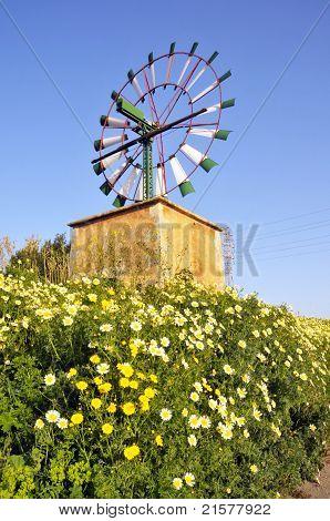 Windmill amongst daisies