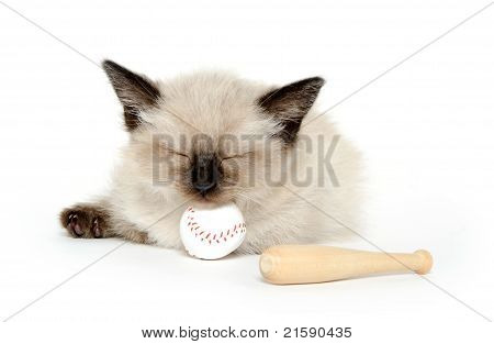 Cute Kitten And Baseball