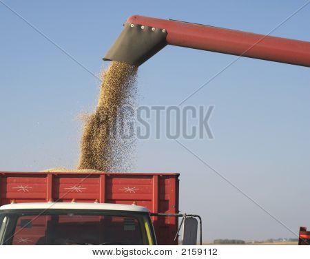 Colheita de outono: Combinação de soja