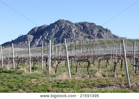 Okanagan Vineyard Spring View